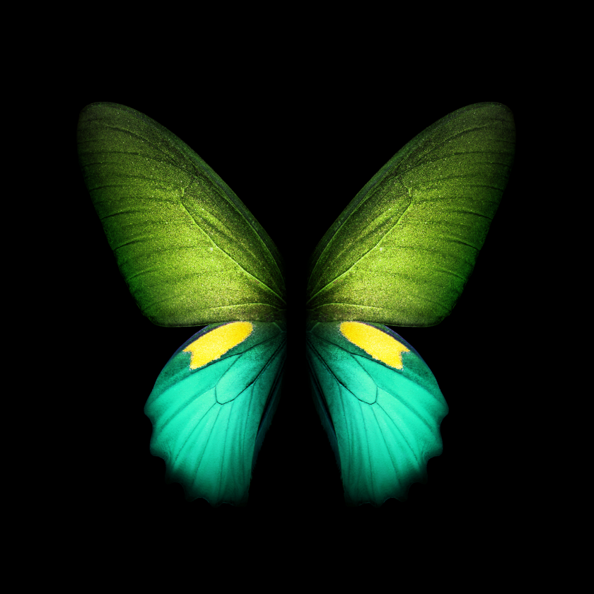 Samsung Galaxy Fold butterfly wallpaper in green with two wings.