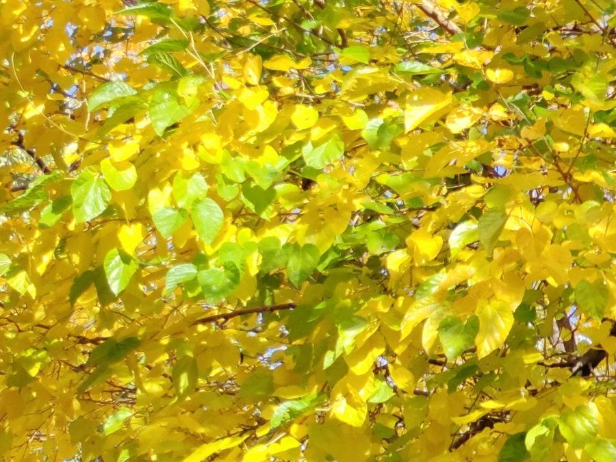 108mp camera sample tree cropped