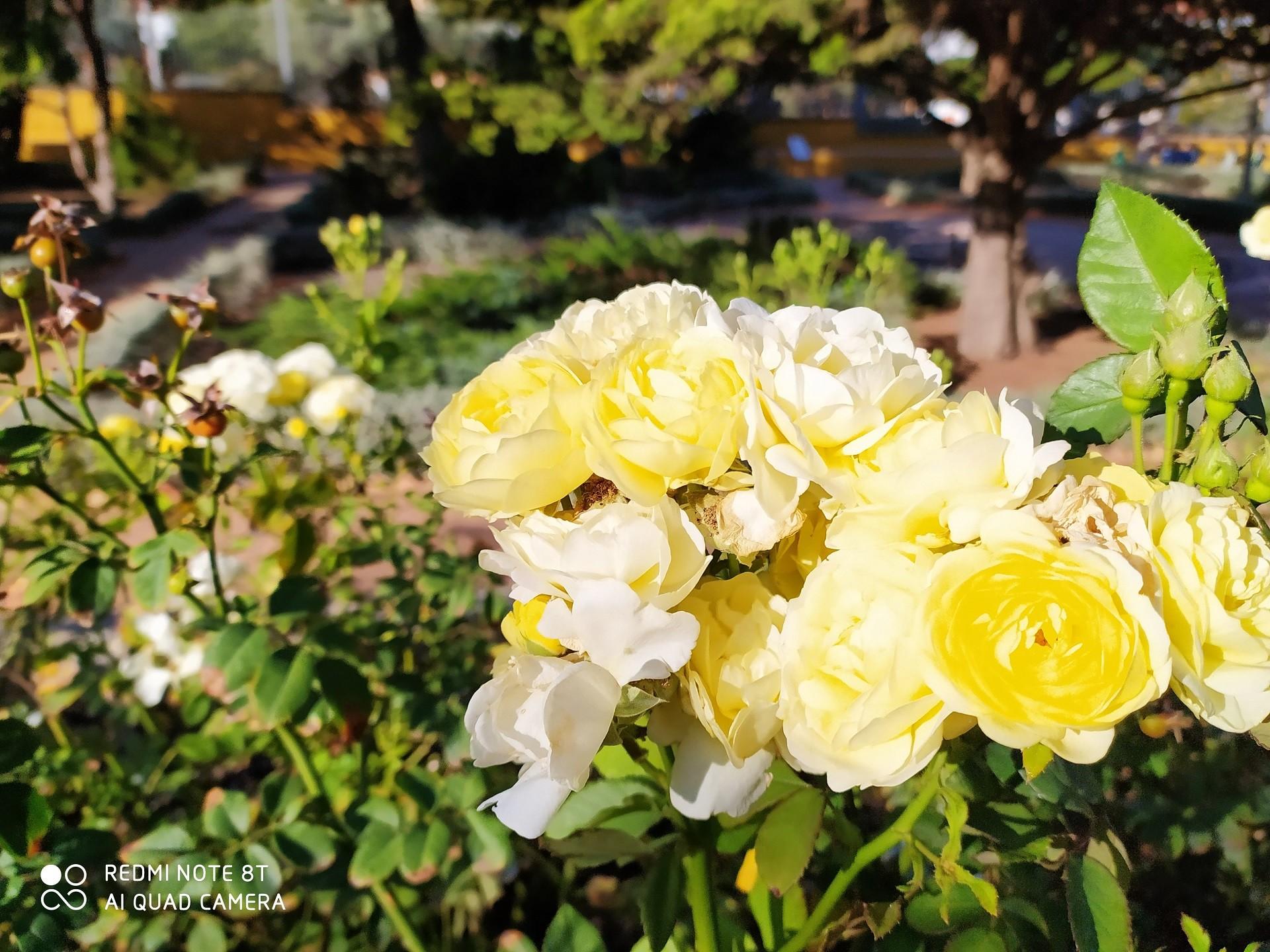Redmi Note 8T flowers 1