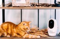 Pawbo Pet Life Camera
