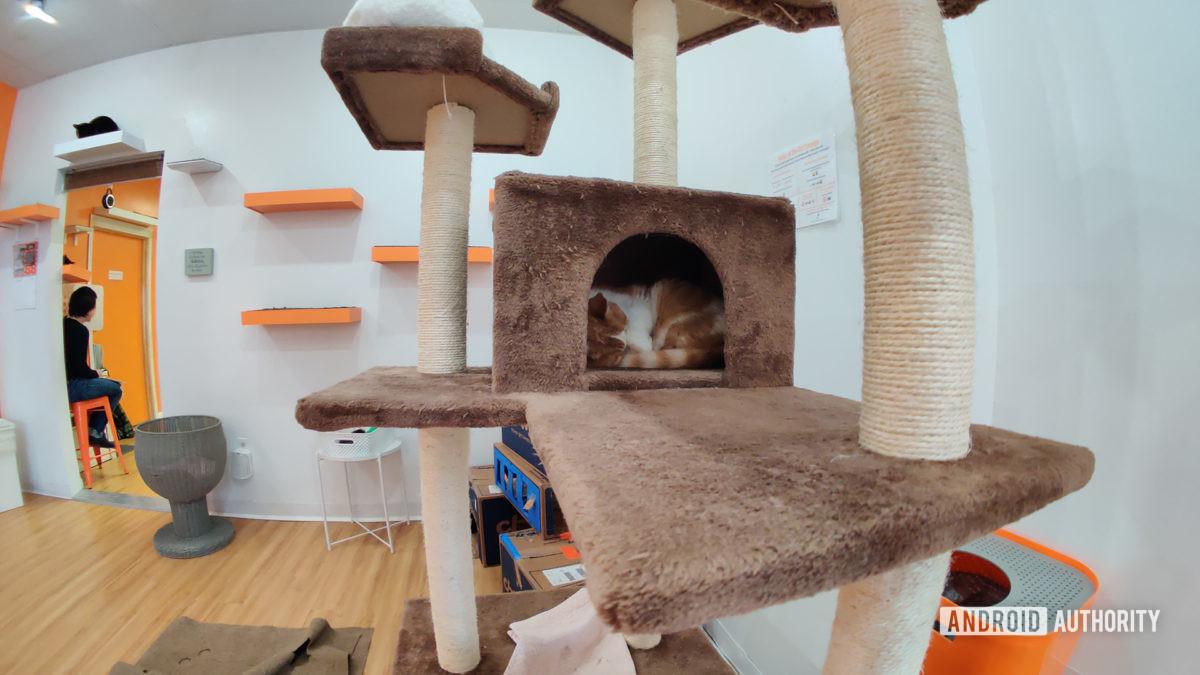 Cat in Tower Moment Fisheye Lens