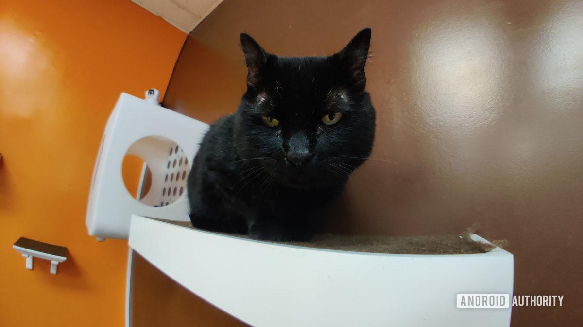 Black Cat with Moment Fisheye Lens