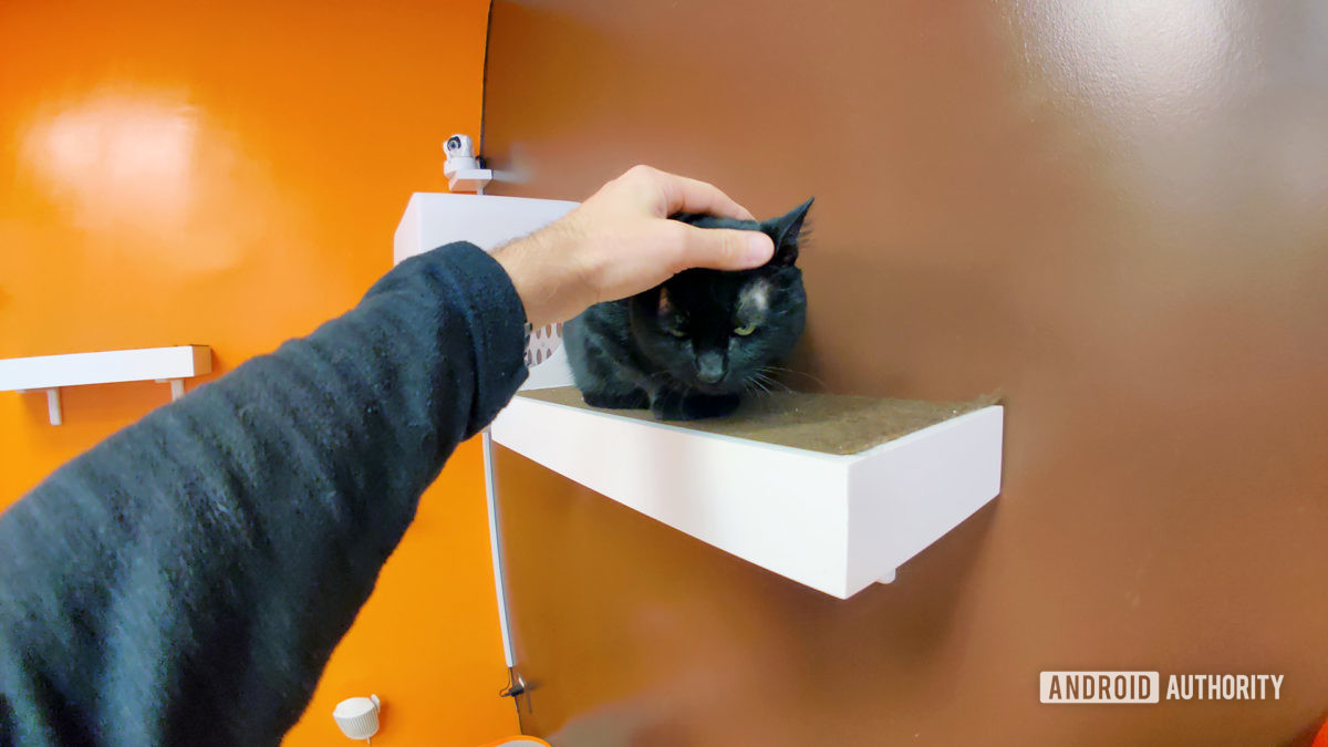 Petting Black Cat With Moment Fisheye Lens