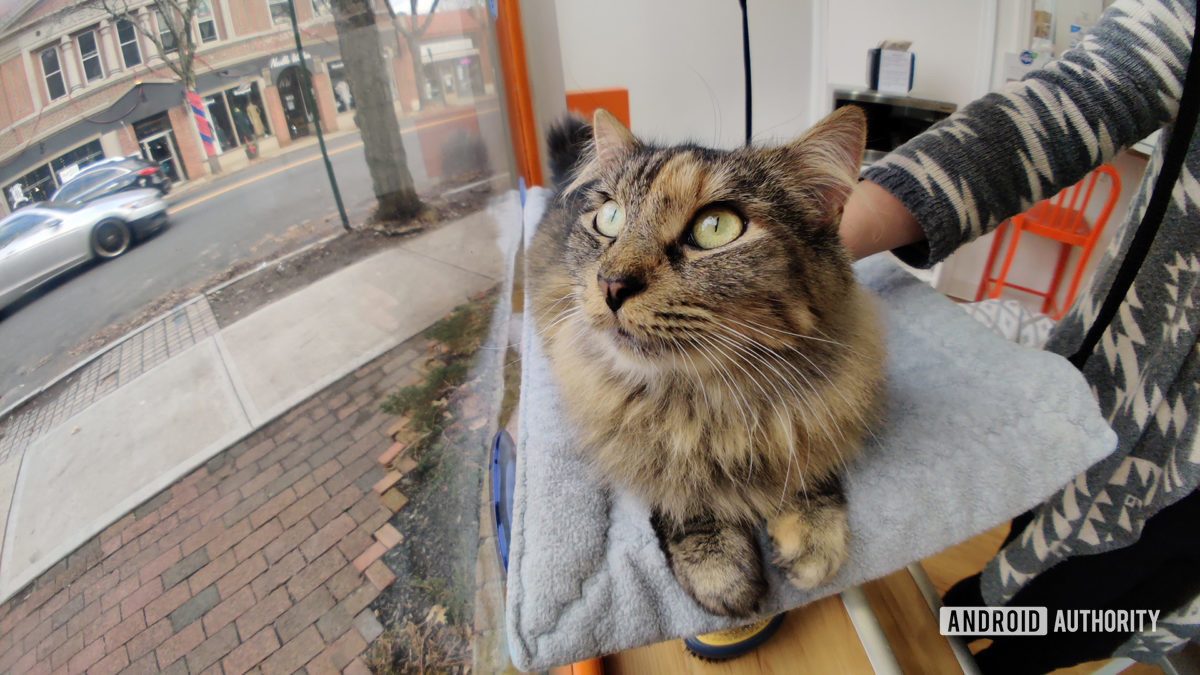 Moment Fisheye Lens Cat