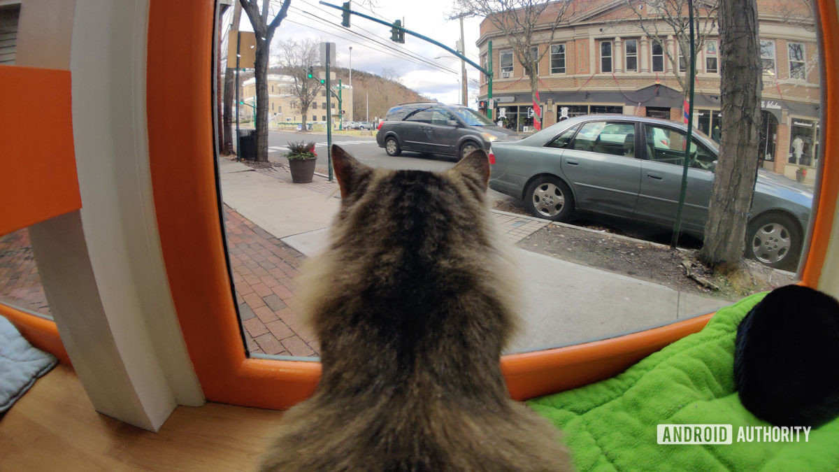 Moment Fisheye Lens Back Of Cat Looking Out Window