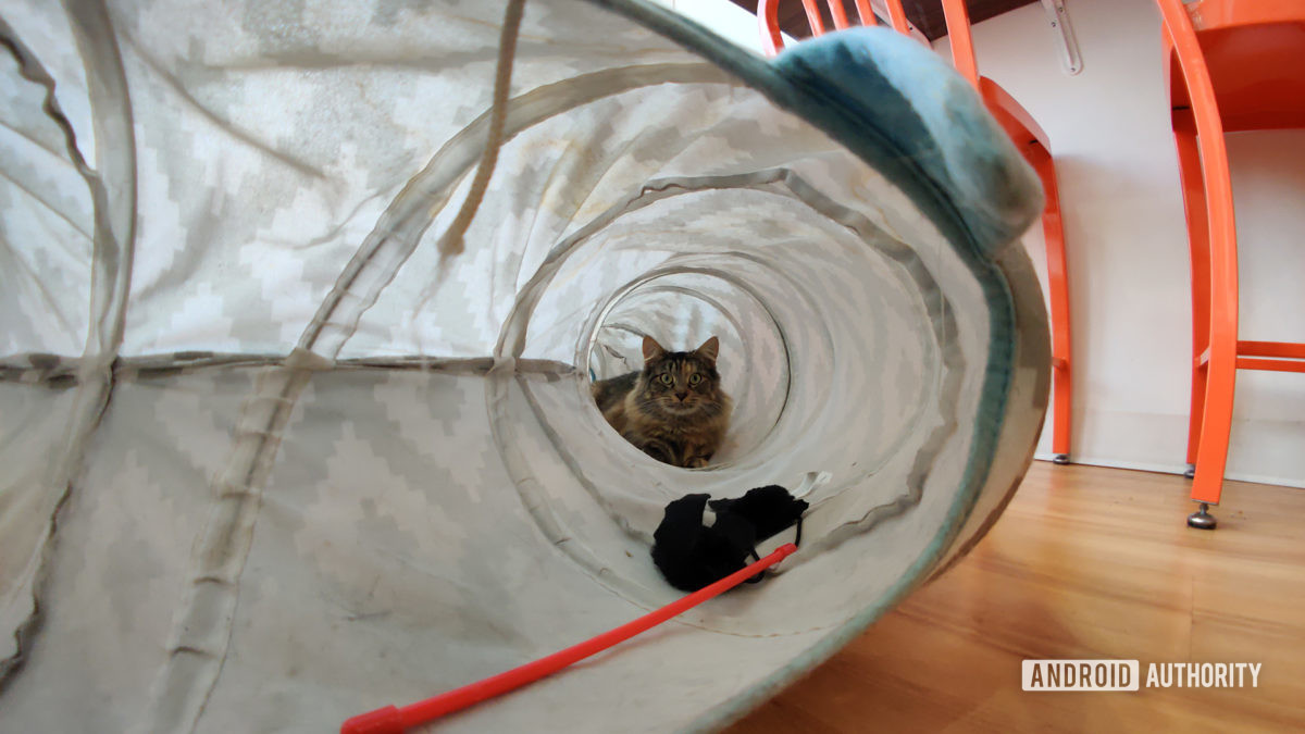 Cat in Tunnel with Moment Fisheye Lens